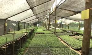 พลิกดินร้าง ปลูกผักออร์แกนิกขายรายได้งาม