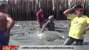 นาทีชีวิต! ชาวบ้านระดมช่วยโลมา เกยตื้นติดโคลนชายทะเล