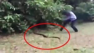 หญิงวิ่งไล่จับงูยาวเกือบ 2 เมตร พุ่งตะปบด้วยมือเปล่า