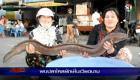 ฮือฮา! พบปลาไหลยักษ์ ใหญ่ที่สุดในเอเชีย